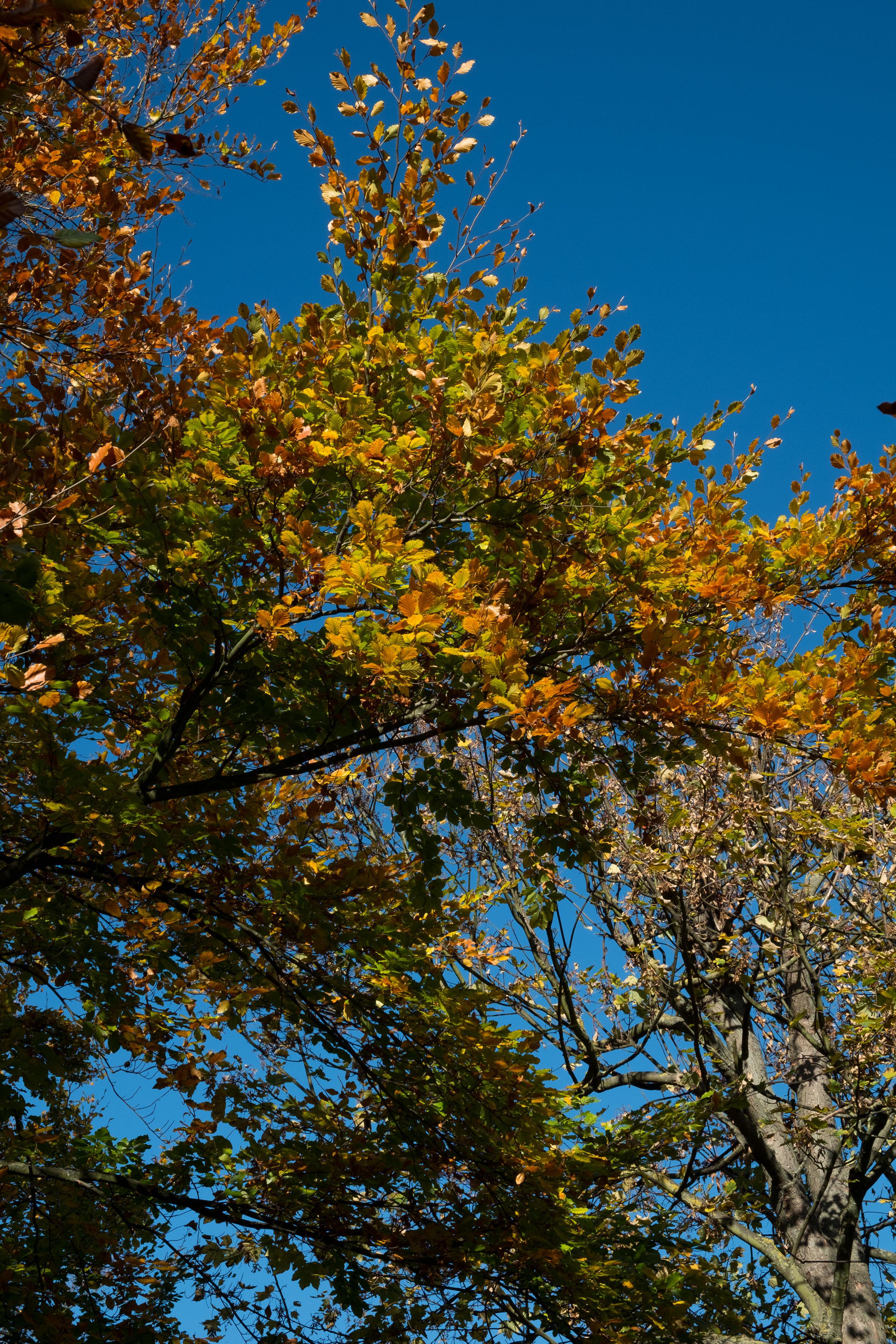 Autumn against the blue sky