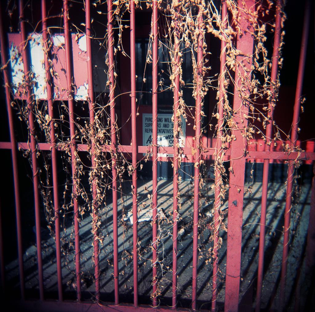 Gate, Adrian, Michigan. 2003.