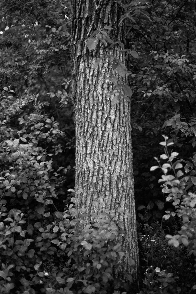 Essex Park, Rochester, Minnesota. 2010.
