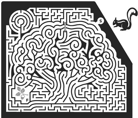 47_Oak-Tree-Maze.png