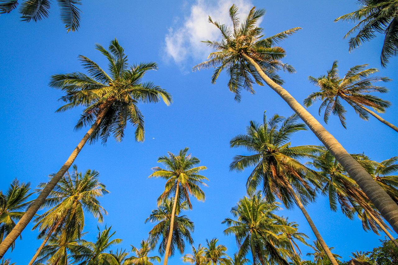 palm-trees-sky_4460x4460.jpg