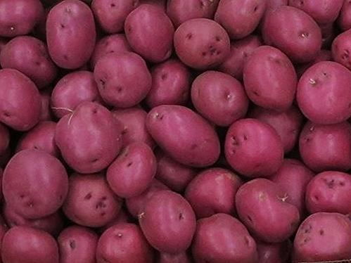 Potato Boxes.jpg