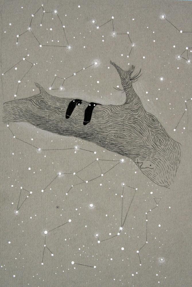 Constellation of socks  2011