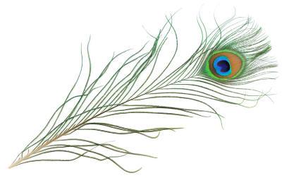 peacock_feather.jpg