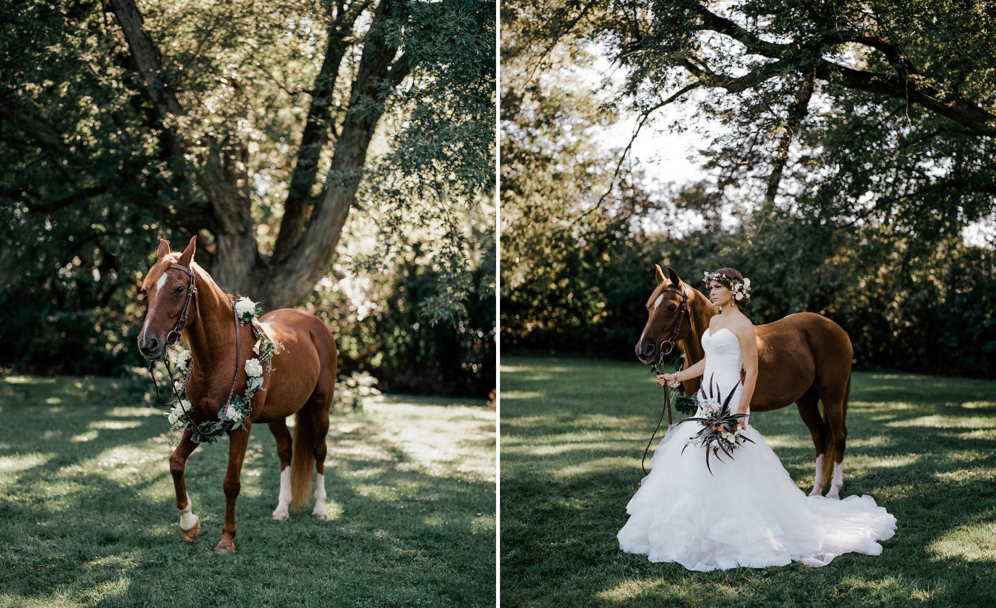 Horse-and-bride-wedding-photos
