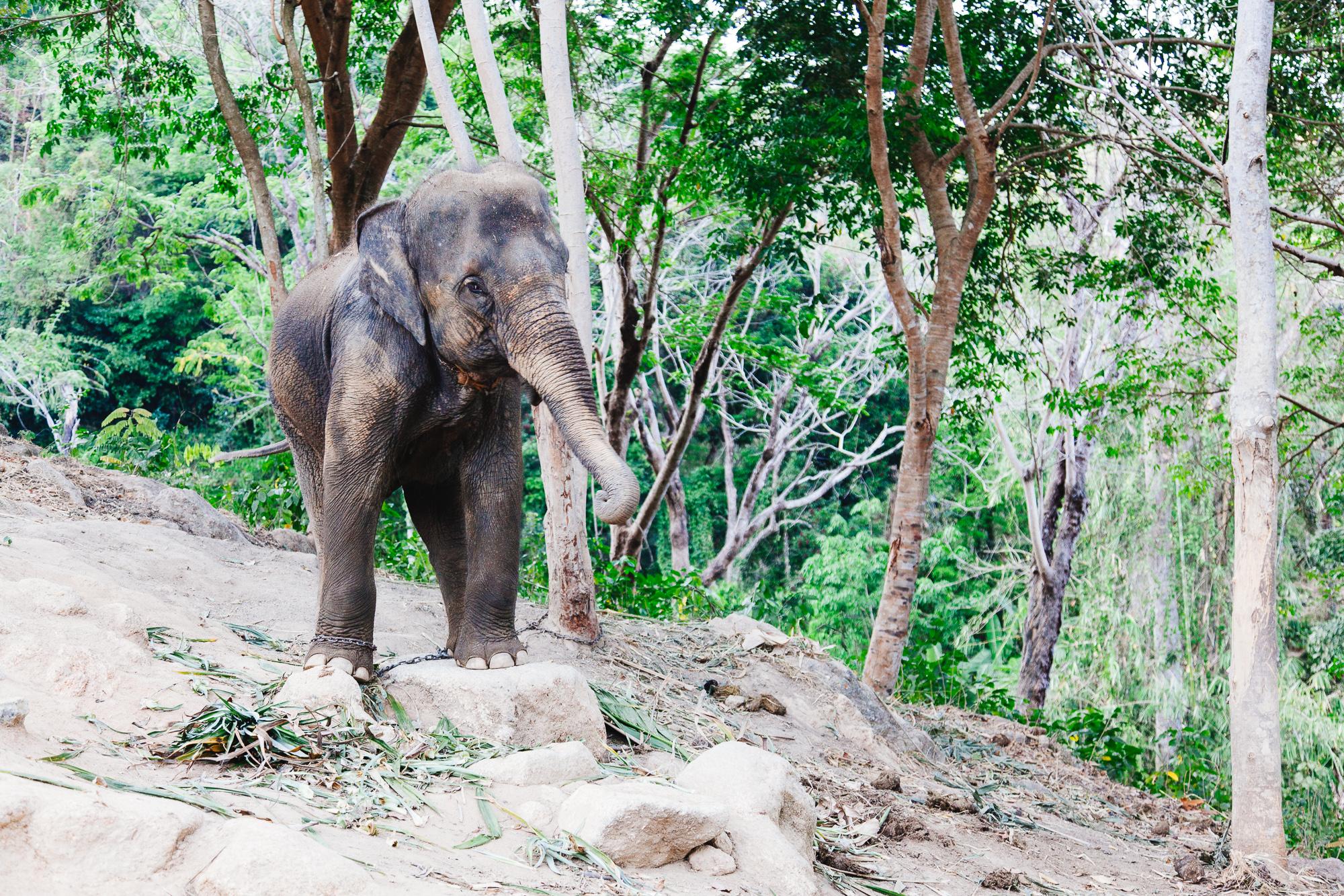 Thailand1-037.jpg