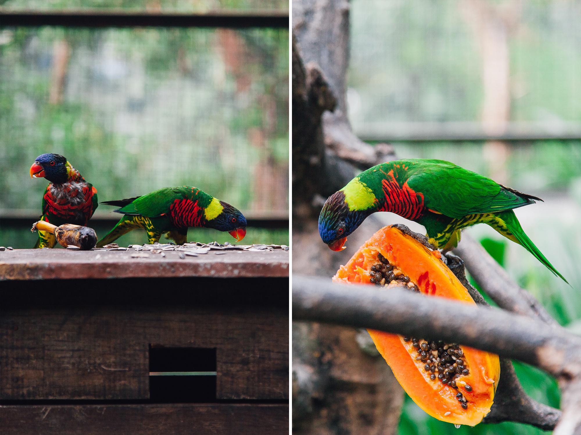birddiptych.jpg