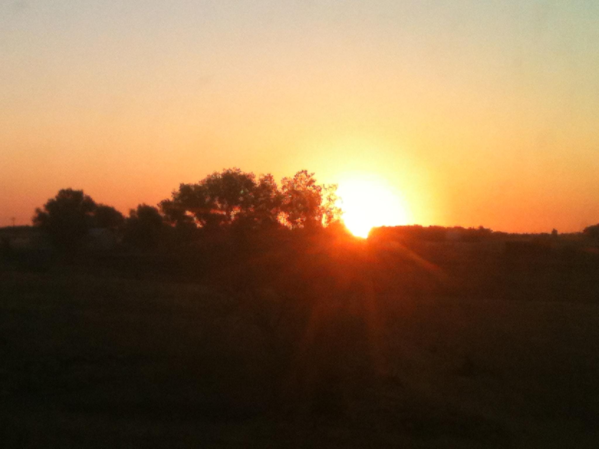 sunrise on the farm; Marion