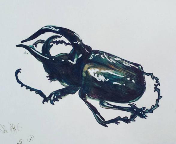 beetle buddy