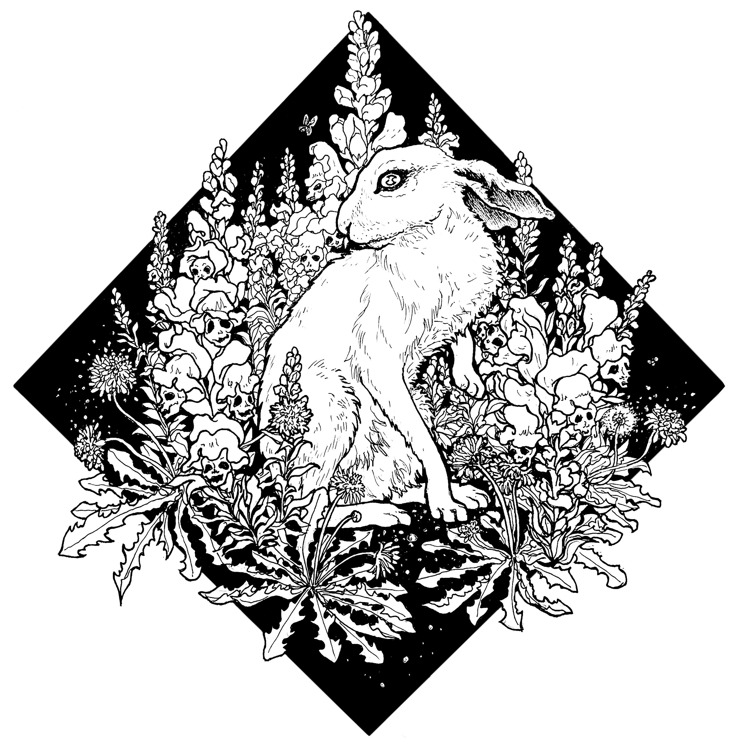 Snapdragon and the Hare