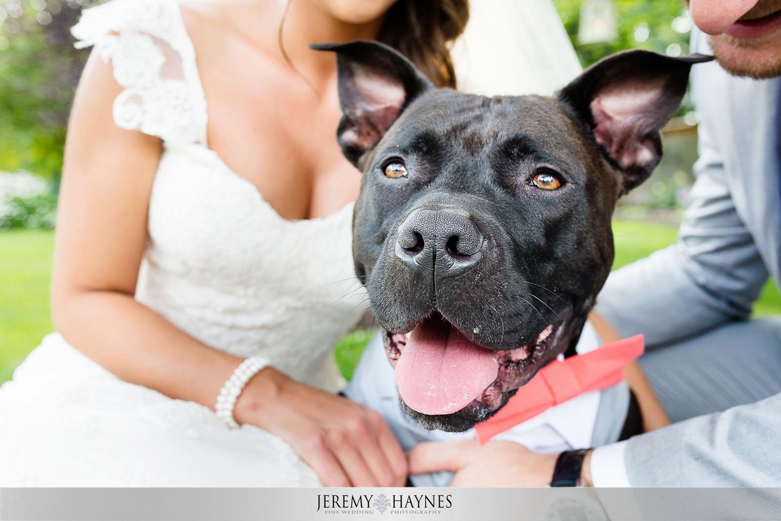 larry-the-dog-wedding