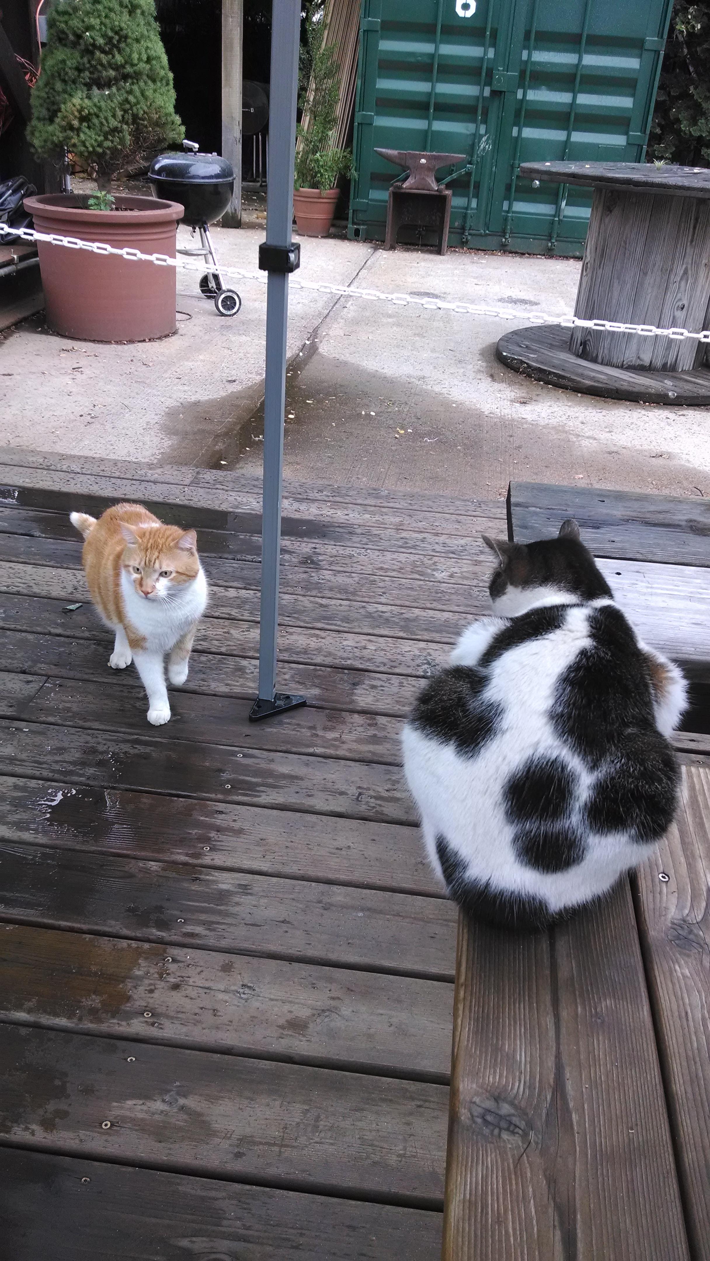 park cats