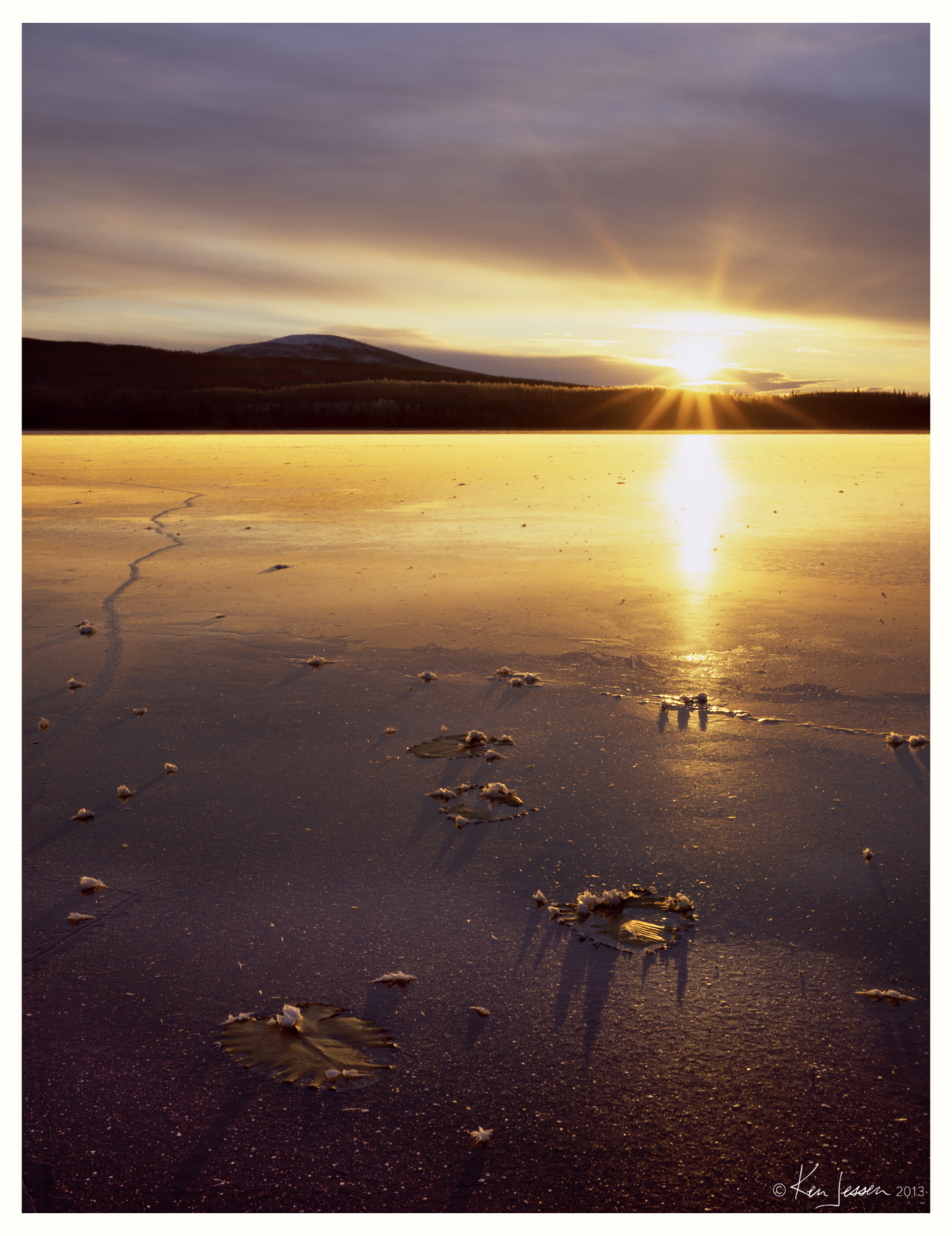 Lily Pads and Winter Sunrise