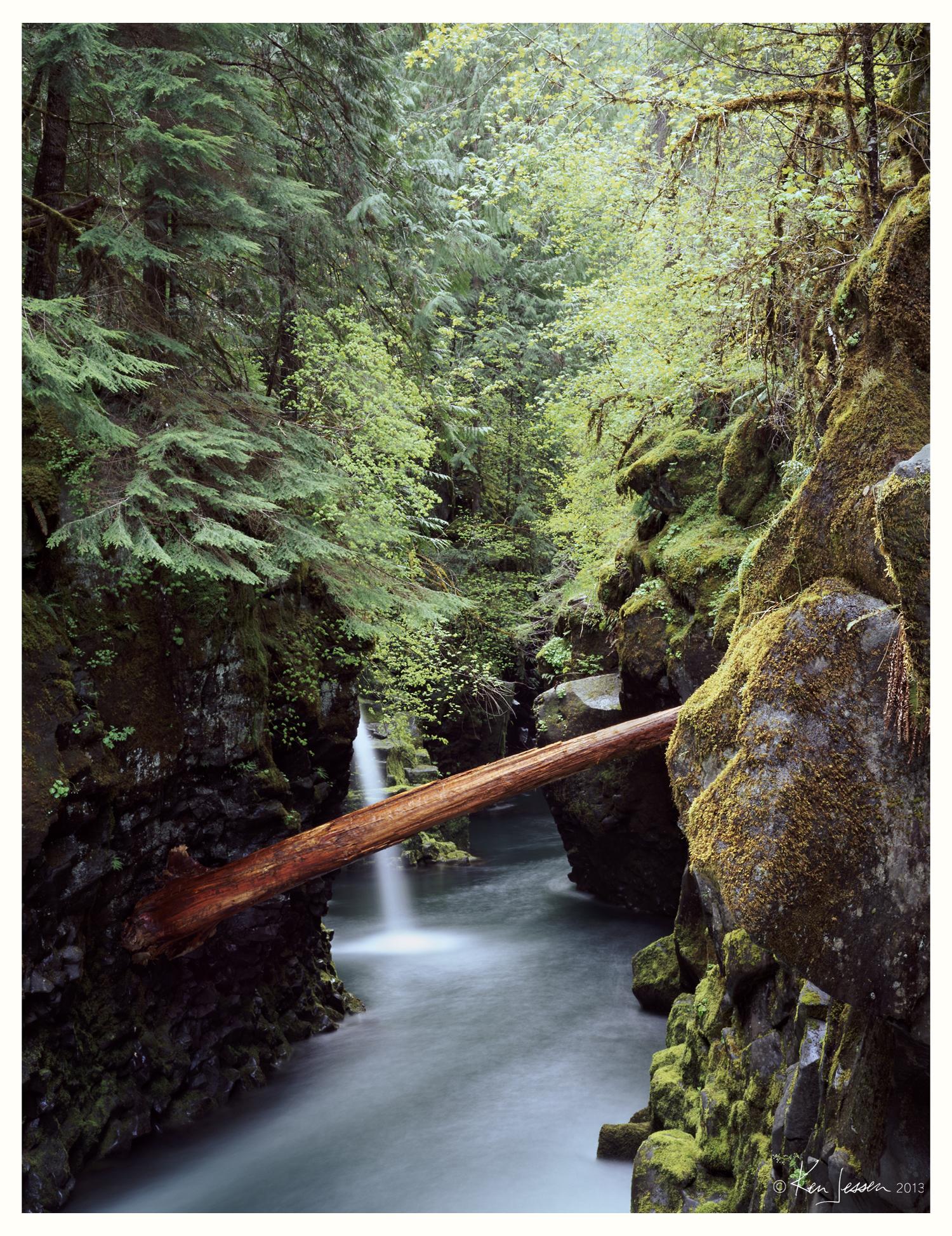 Cedar Log in Narrows
