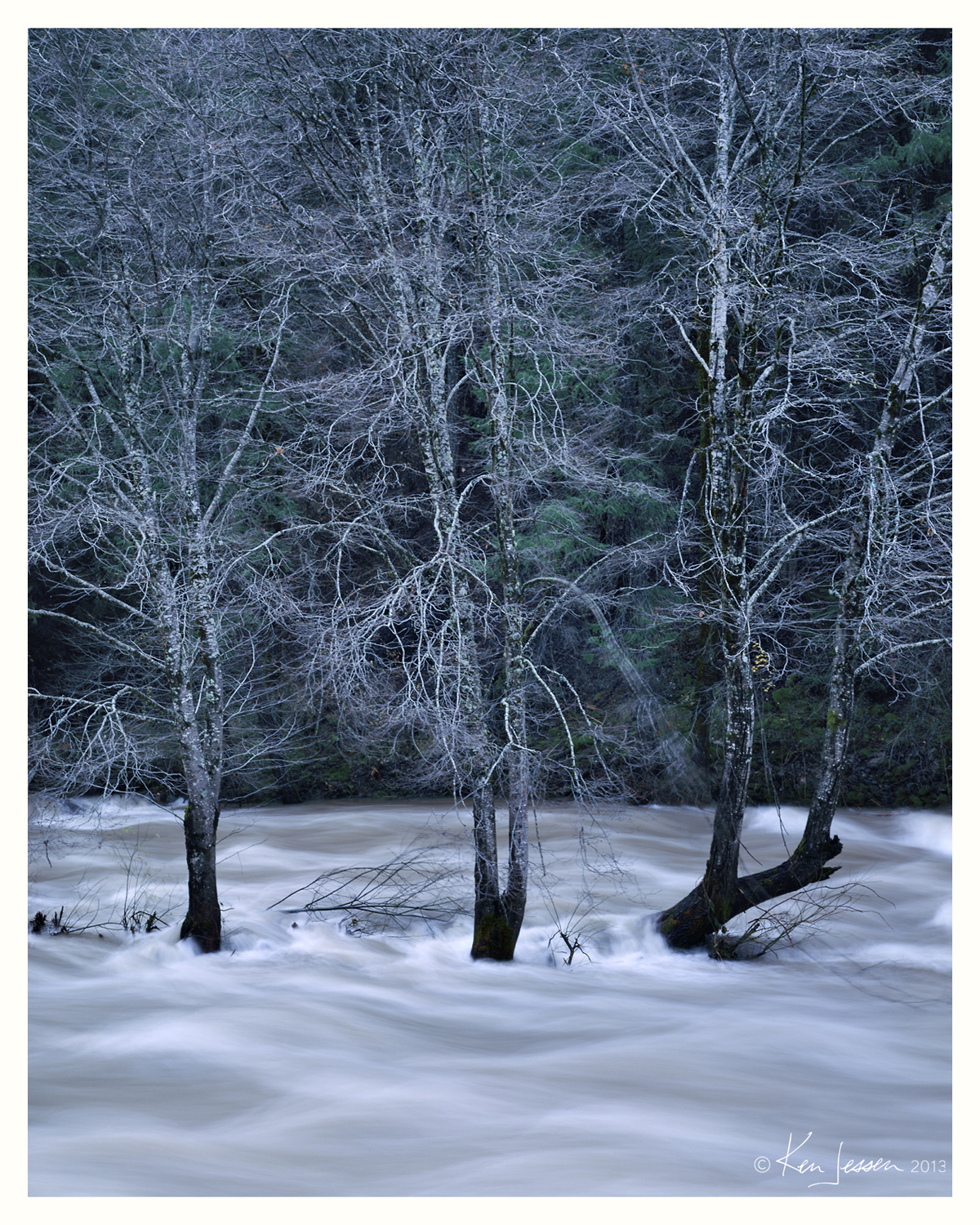 Alders in the Flood
