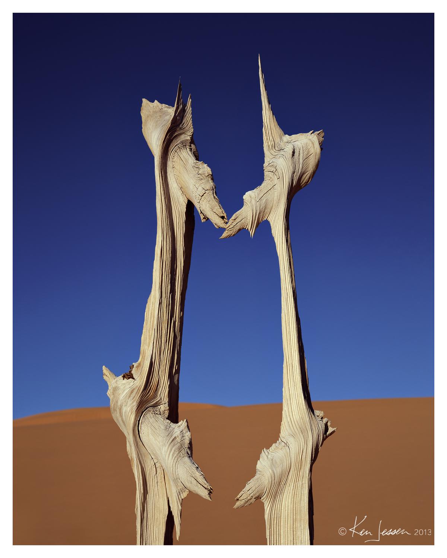 Portrait of a Desert Snag
