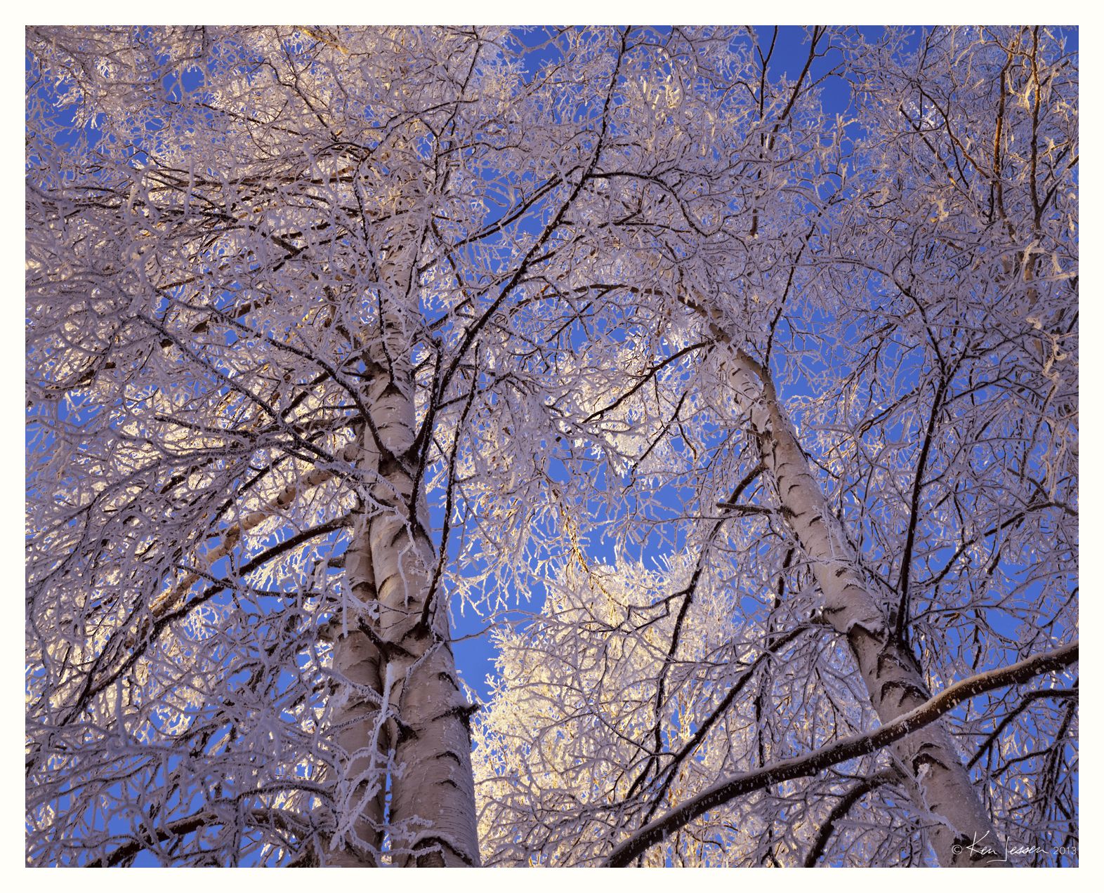 Snowy Birches at -48F