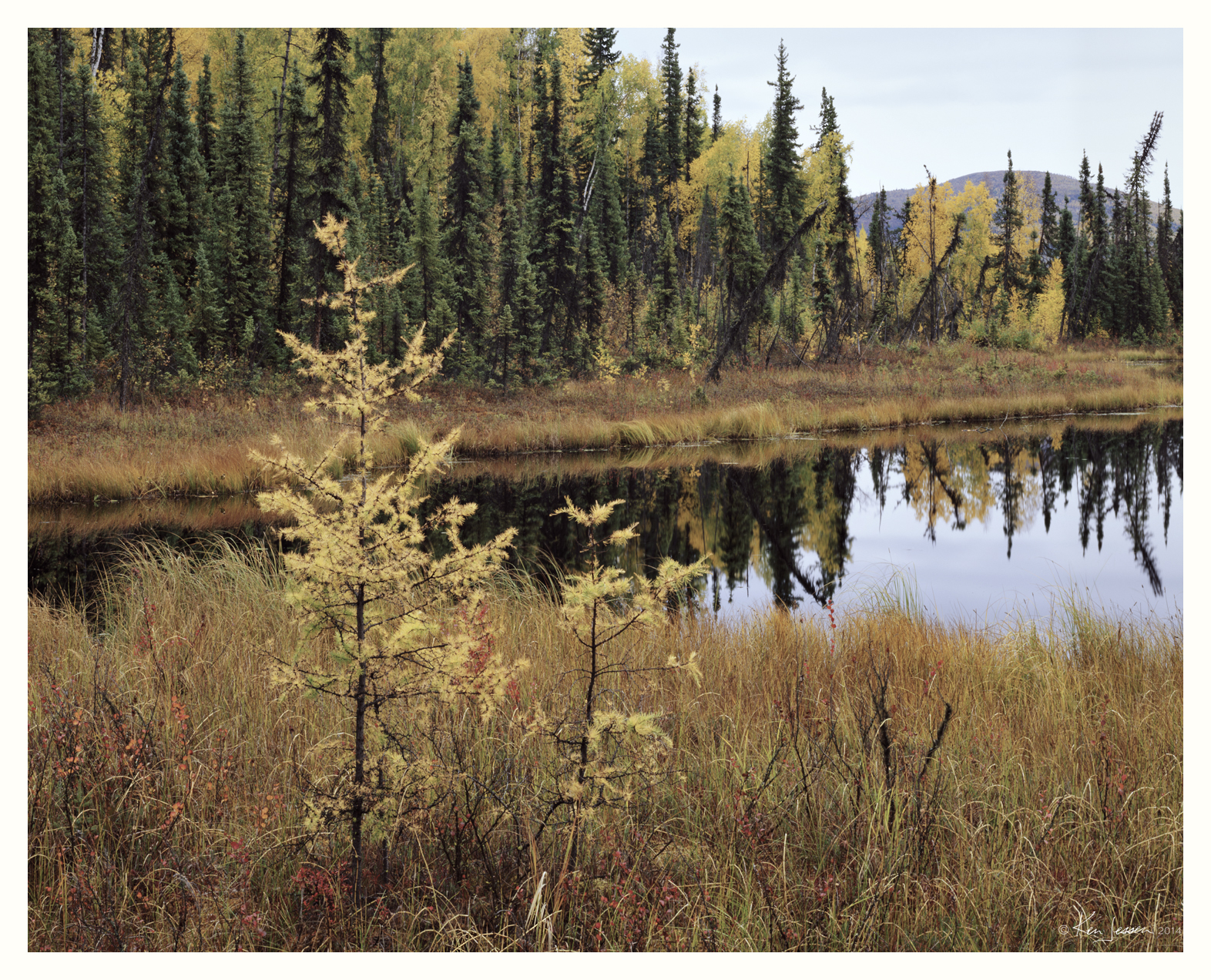 Larch and Pond in Autumn