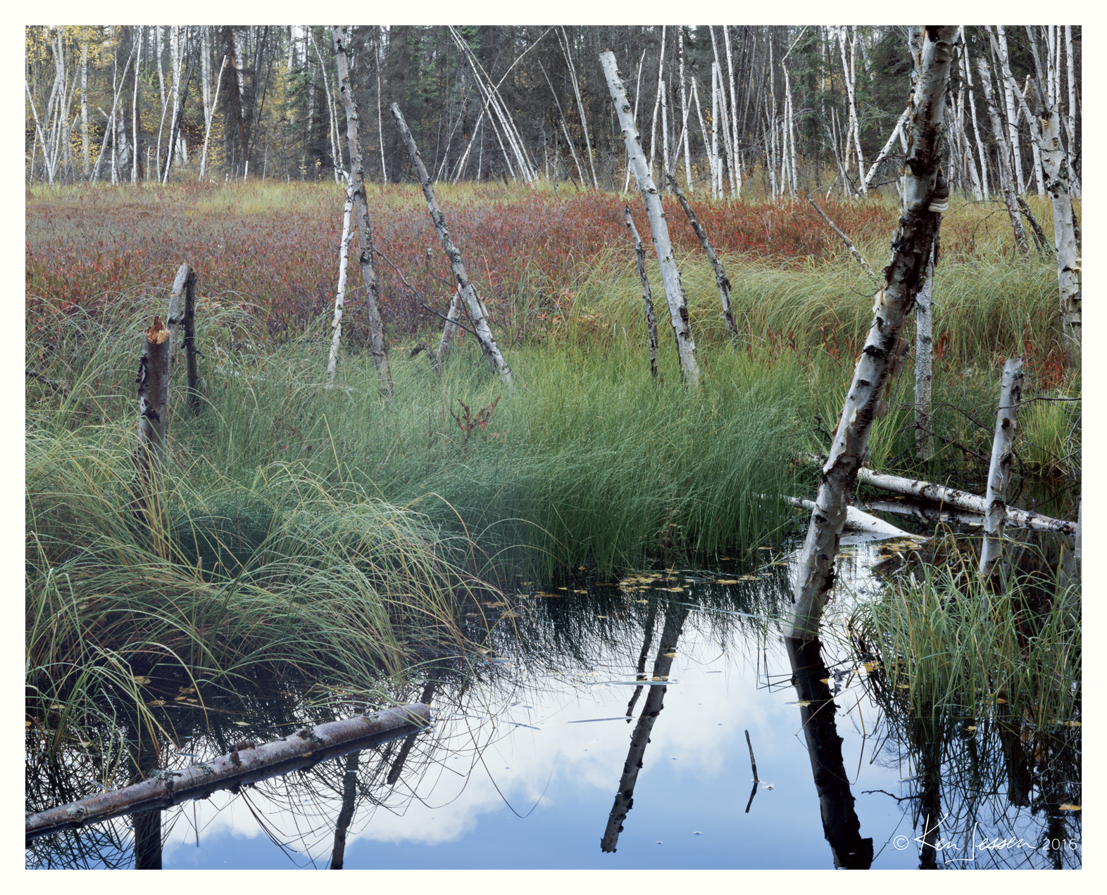 Grass Lake and Drowned Birches