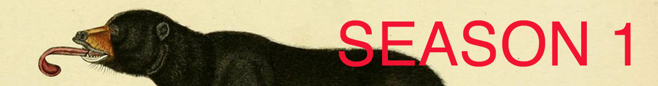 2019 Season 1 banner.png