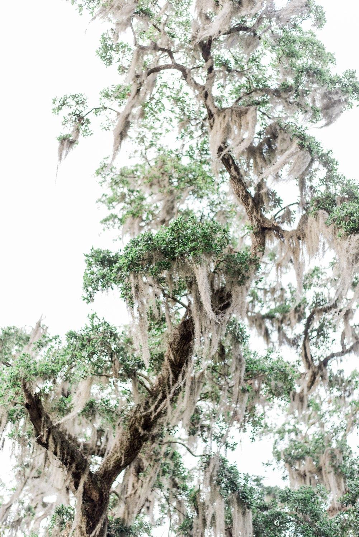 magnoliaplantationengagement | magnoliaplantationwedding | juicebeatsphotography