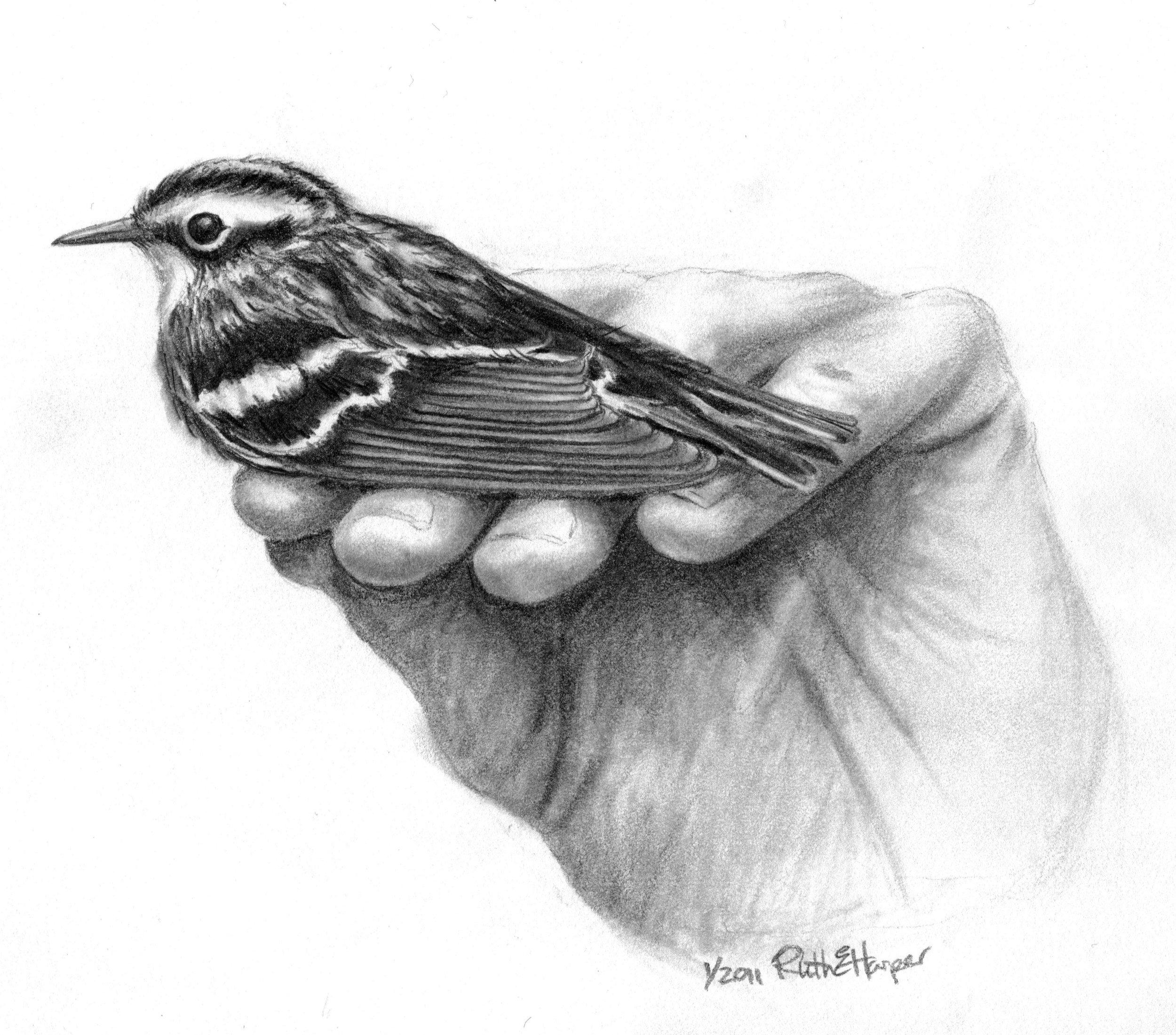 Bird in Hand 5.jpg