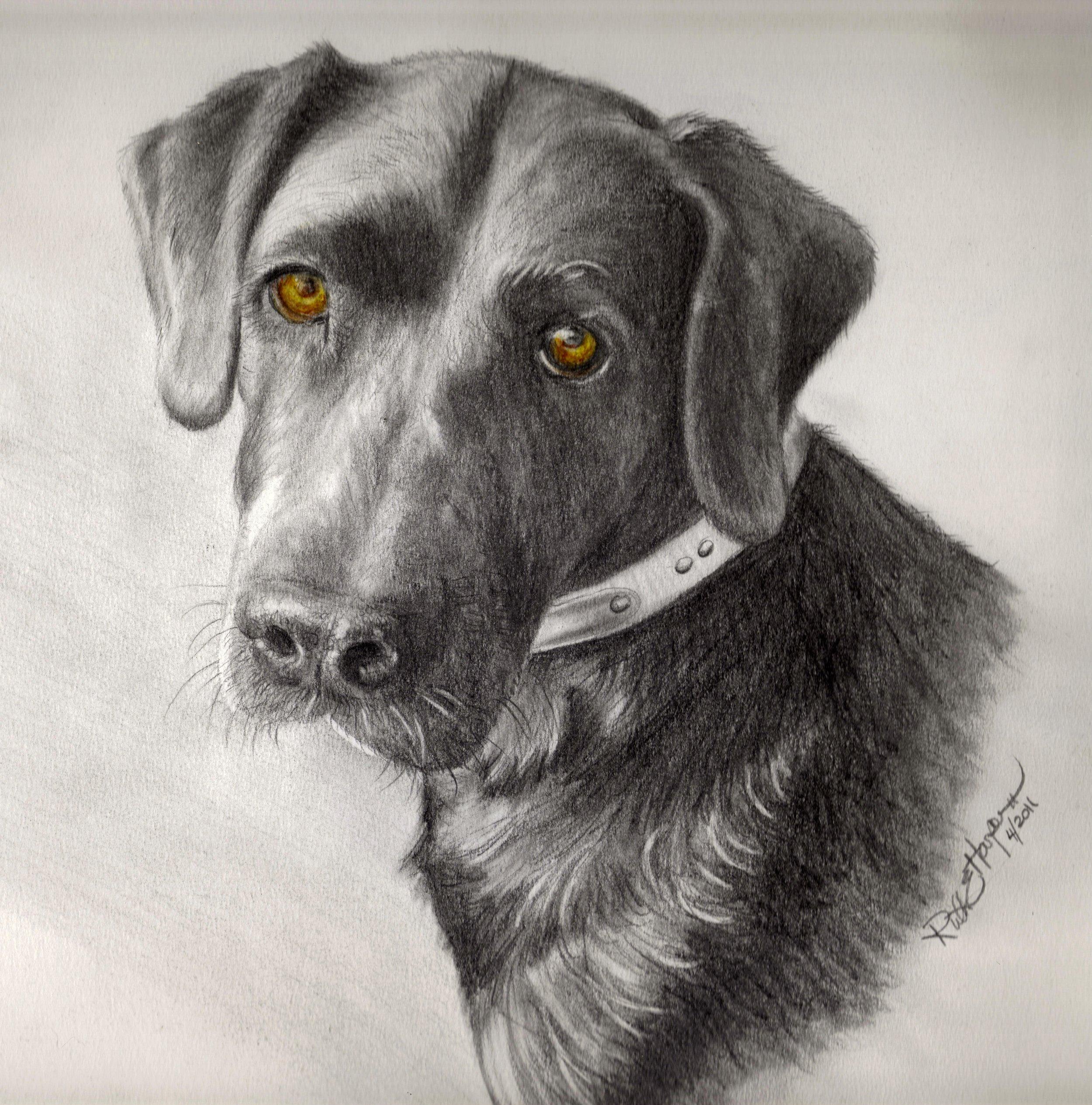 Doggie 1 (Robin).jpg