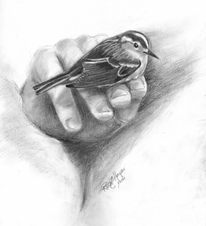 Bird in Hand 1-2.jpg