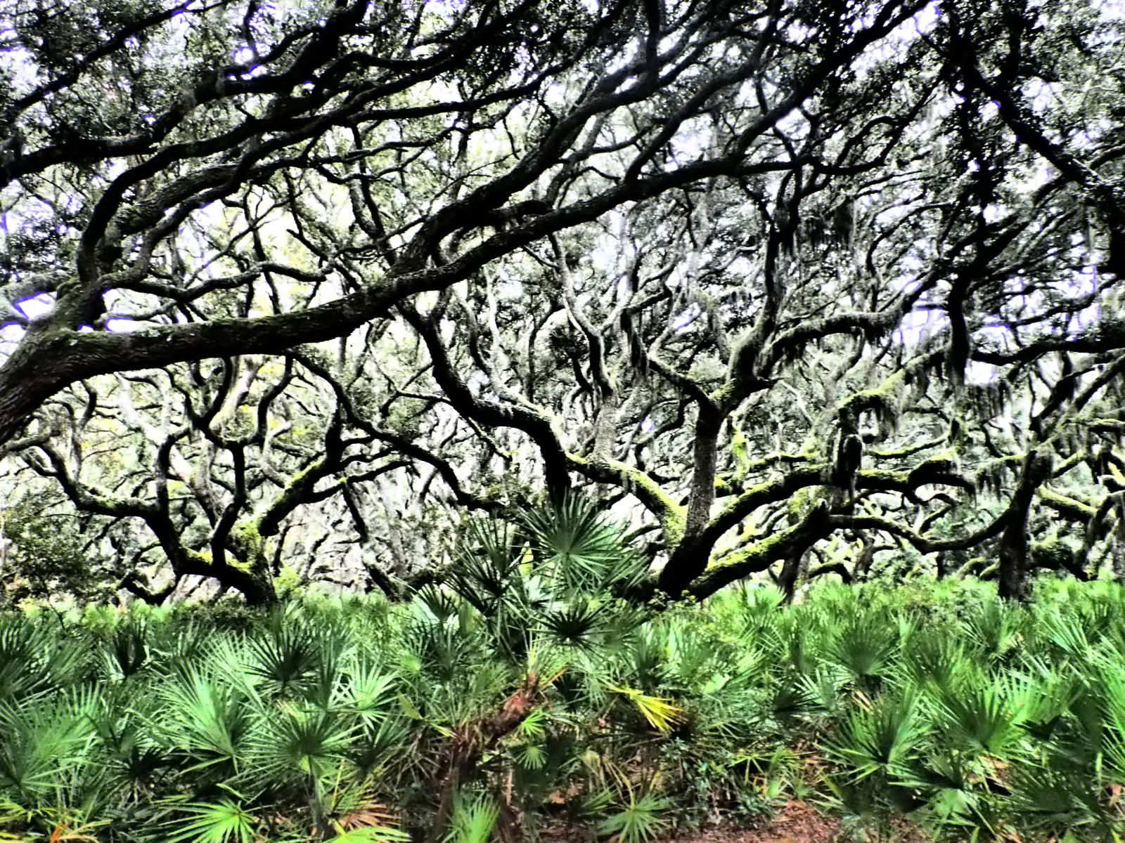 treespalms.JPG