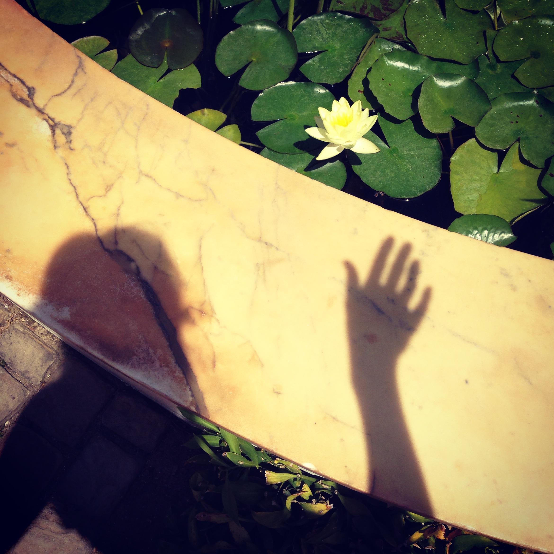 Self reaches the lotus