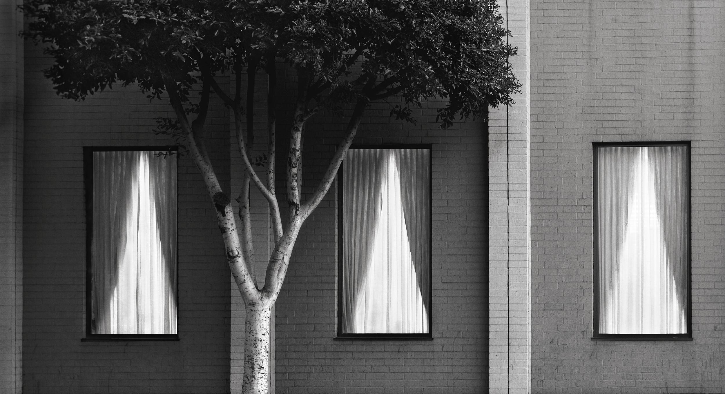 Tree and Three Windows, 1981