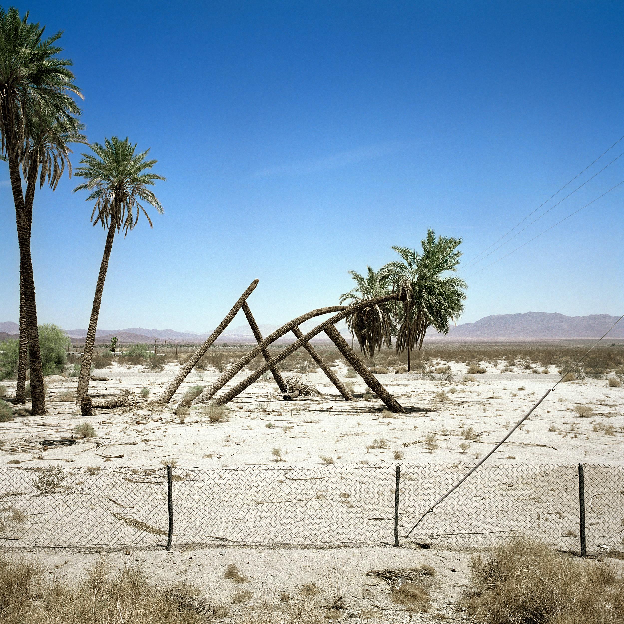Palms at Desert Center, 2002