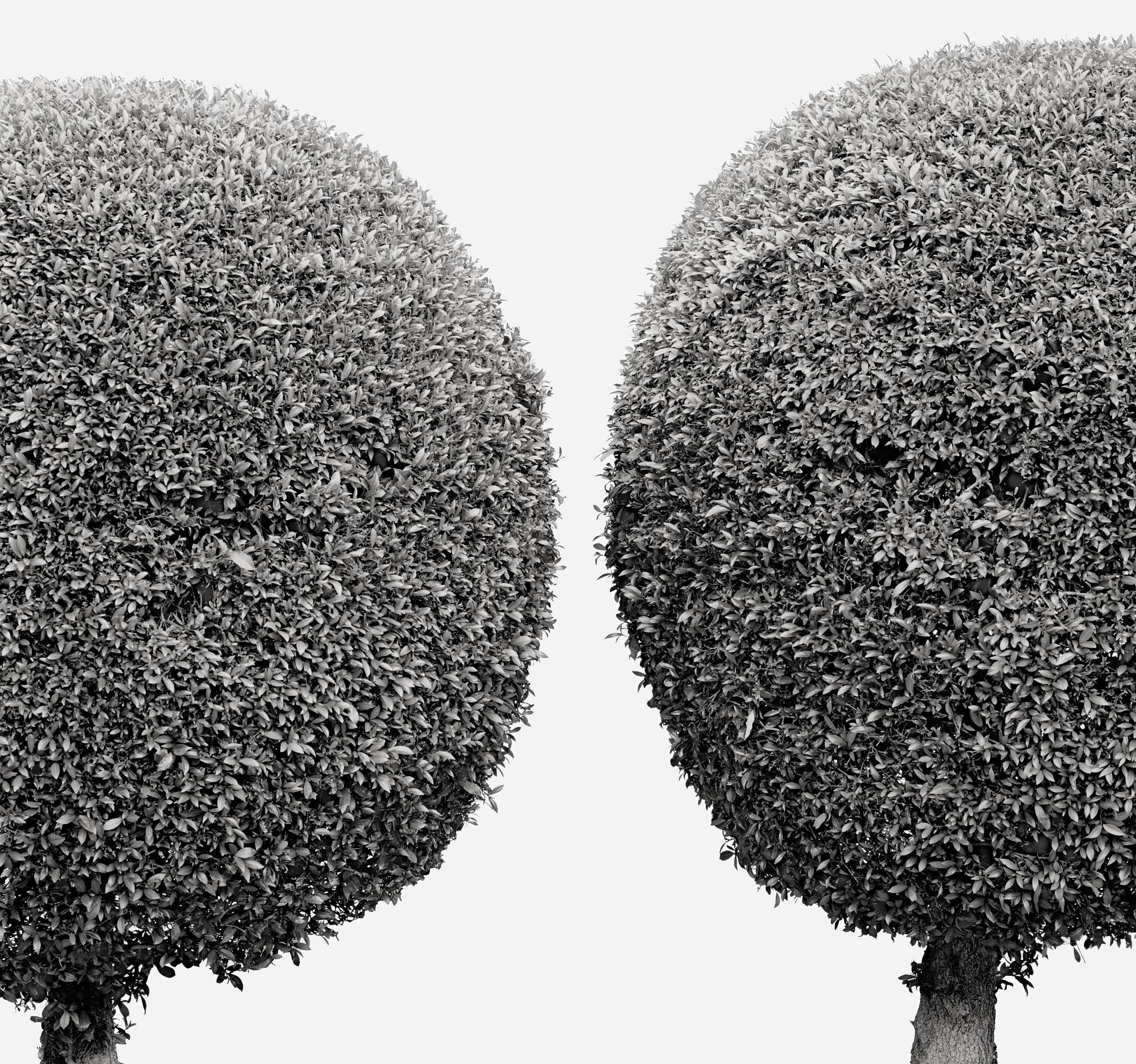 Arboreal Geometry #3, 2001