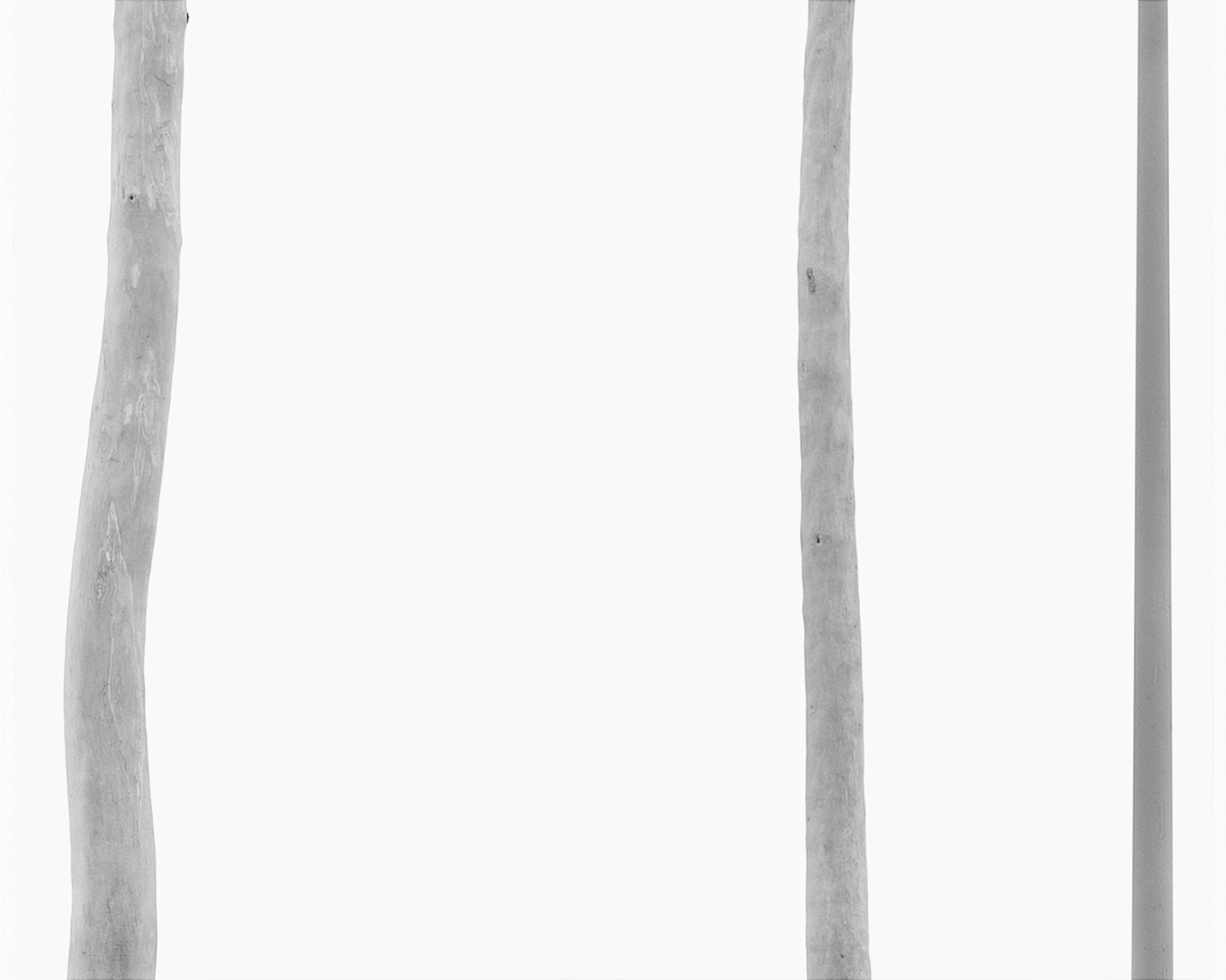 Two Trees, One Pole, 1988
