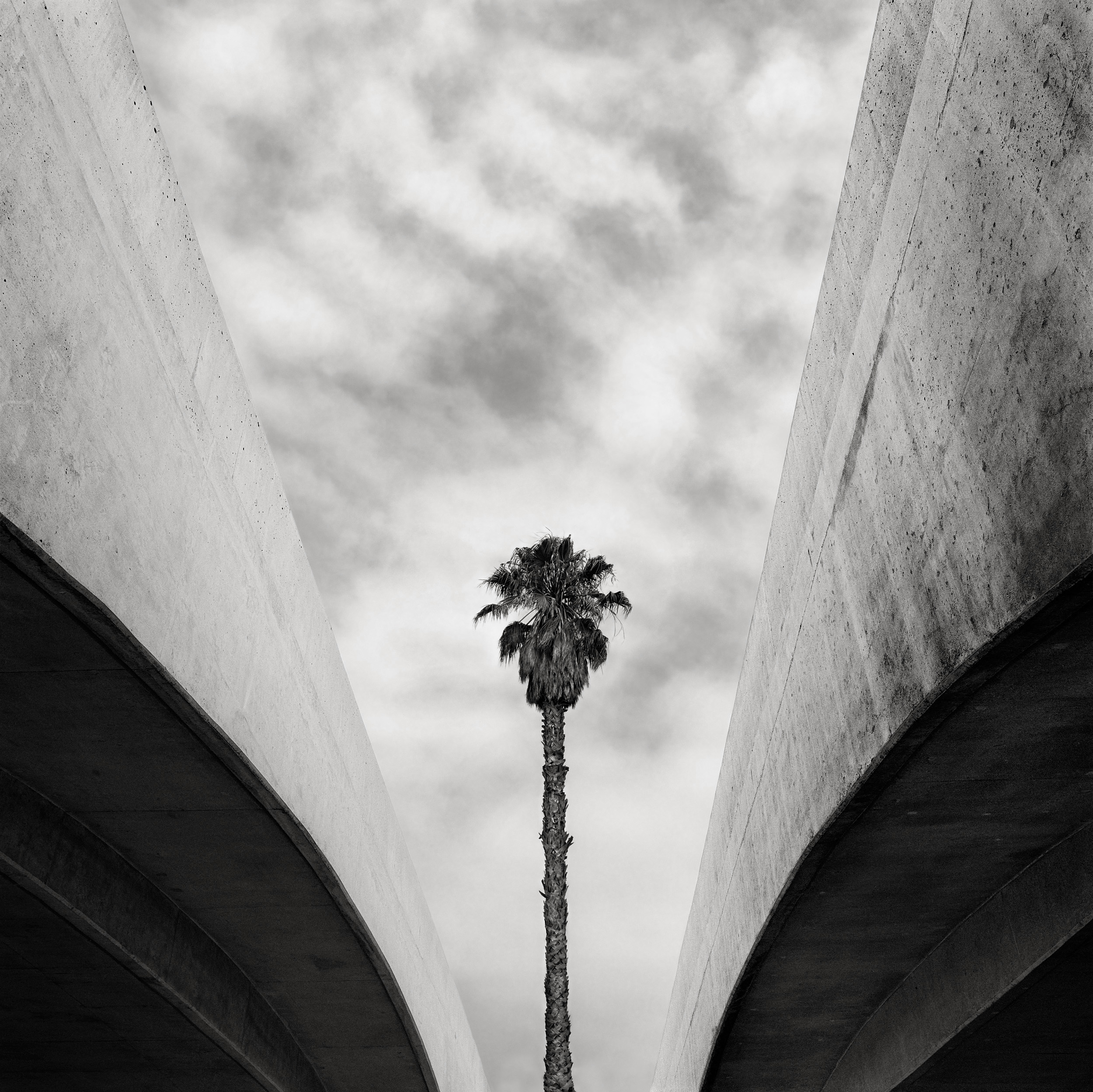 Palm and Overpass, 1996