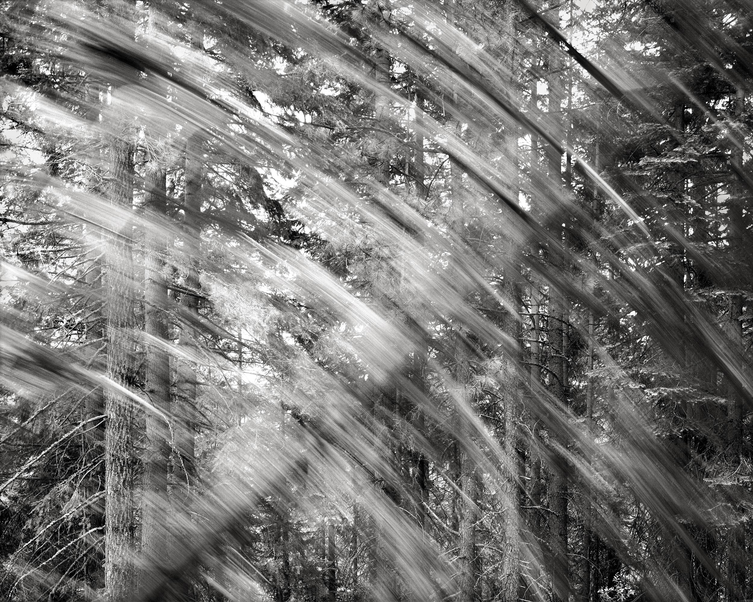 Falling Tree #4, 1989
