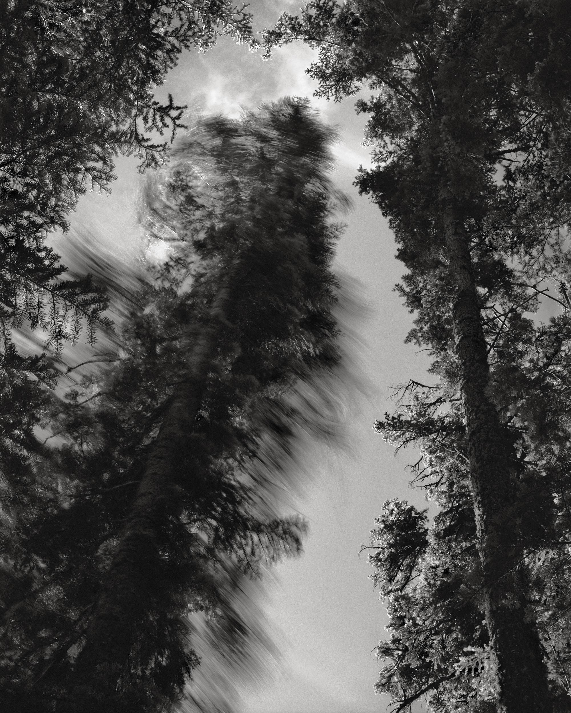 Falling Tree #11, 1989