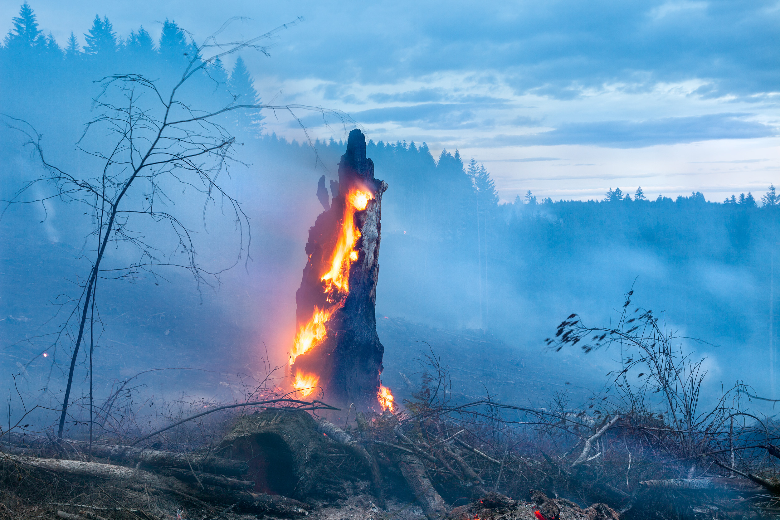 Burn #249, 2009