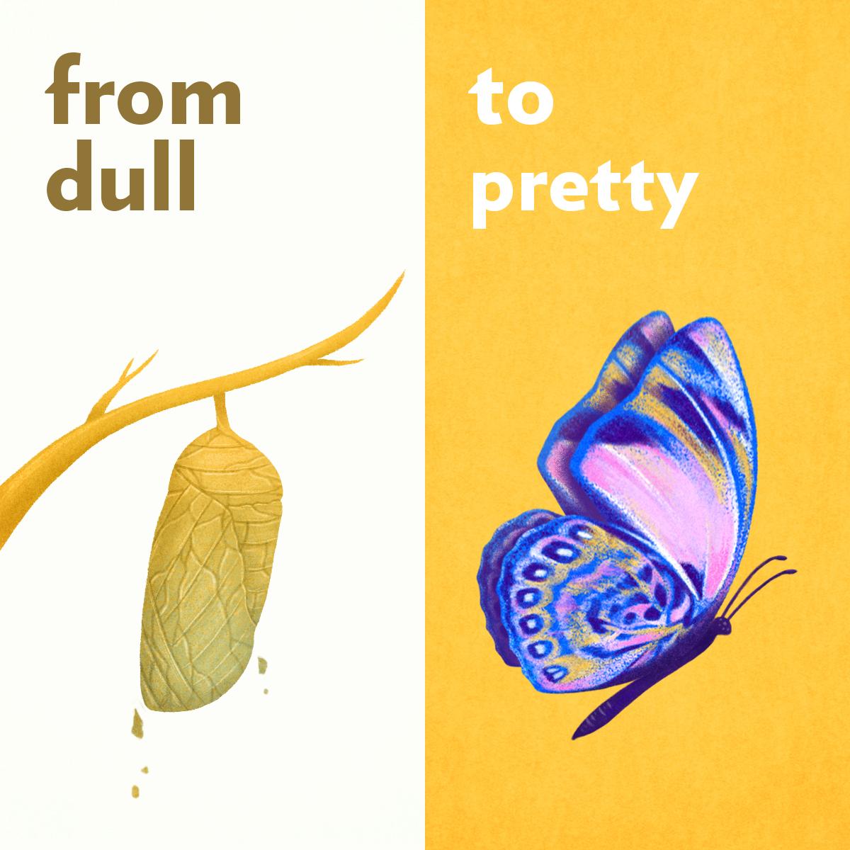 Dull-Pretty_Instagram.jpg