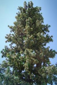 Faux Pine Tree