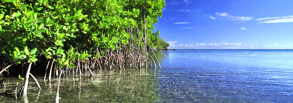 carbon-advantage-slideshow-mangroves.png