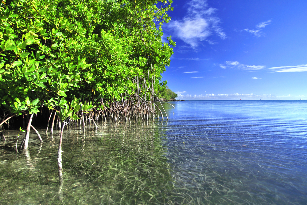 carbon-advantage-mangroves.jpg