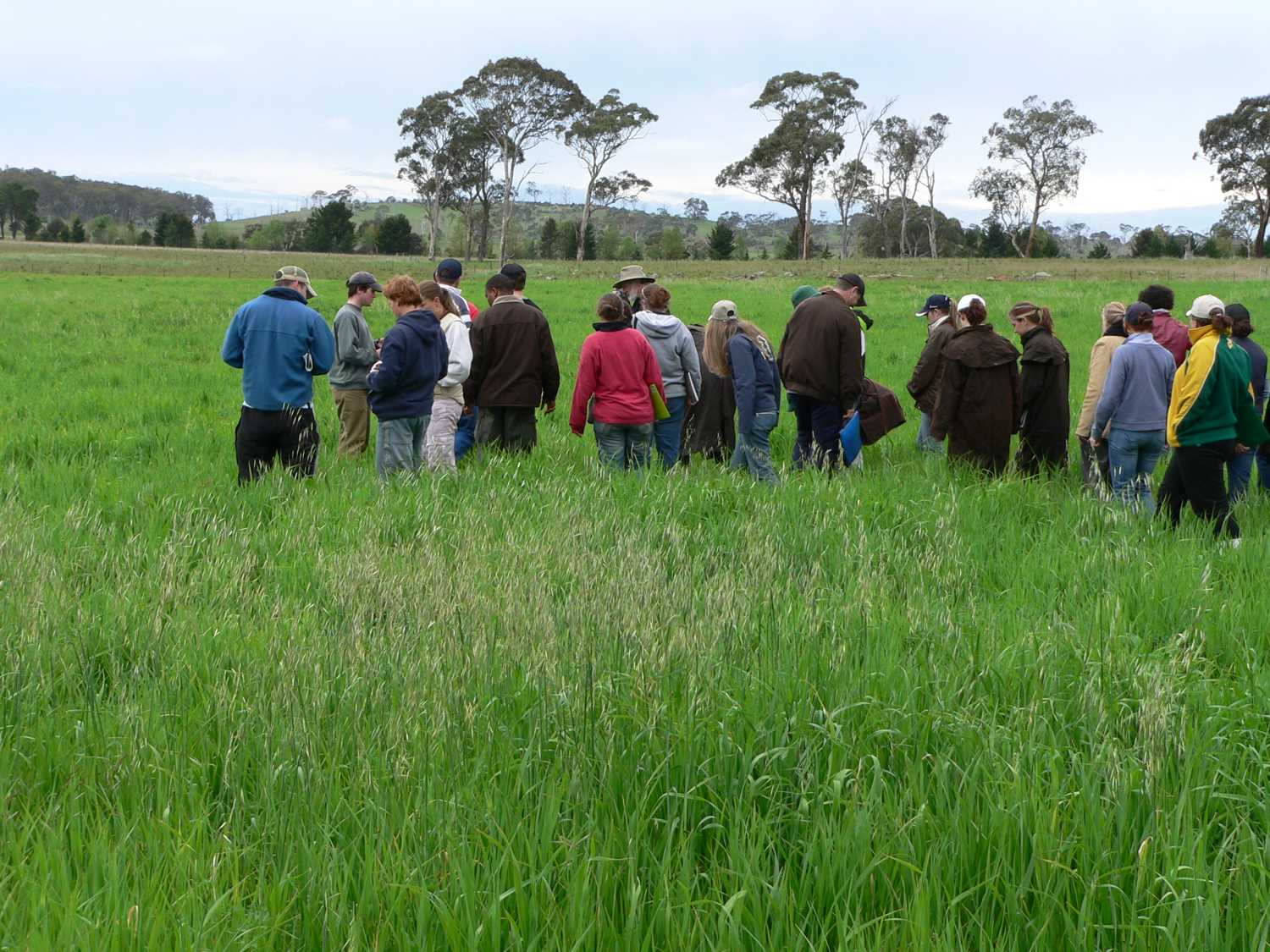 Undergraduate students learning about pastures on the Cicerone farmlets