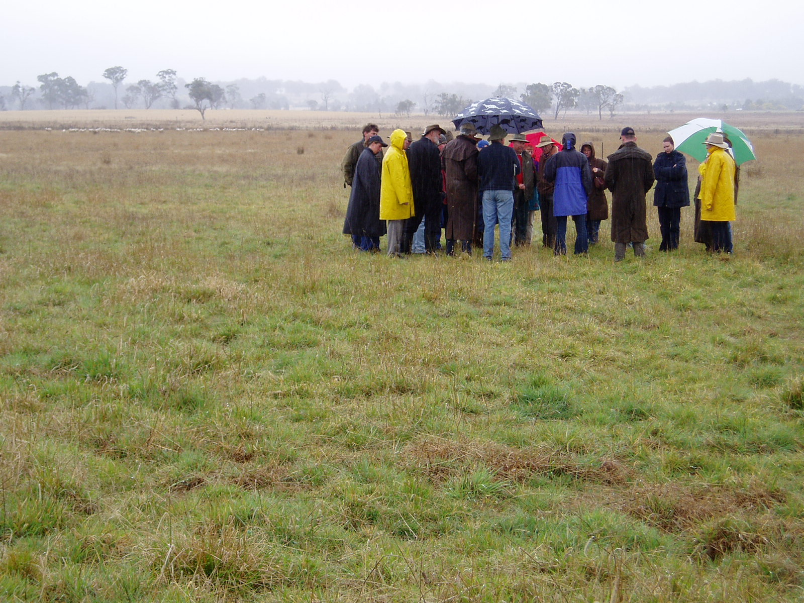 One of the 61 field days held - a rare wet one during the extended dry period experienced over the trial's duration