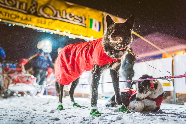 Chance Mclaren Photography_Dave Dalton-Arriving_Dawson City_Yukon Quest 2017-2.jpg