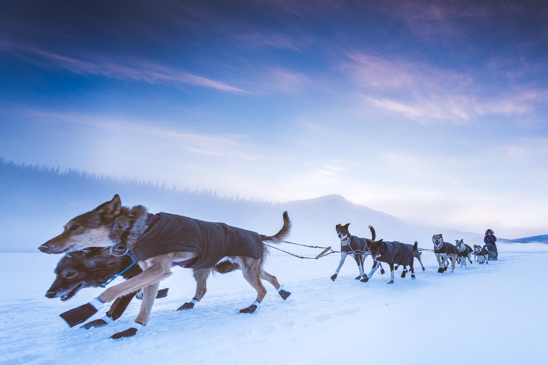 Chance Mclaren Photography_Jessie Royer-Leaving_Dawson City_Yukon Quest 2017-11.jpg