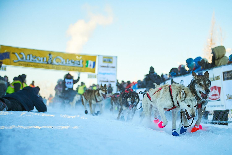 Yukon-Quest-Sled-Dog-Race-Photography-Alaska-Yukon-Chance-McLaren-Photography-03.jpg
