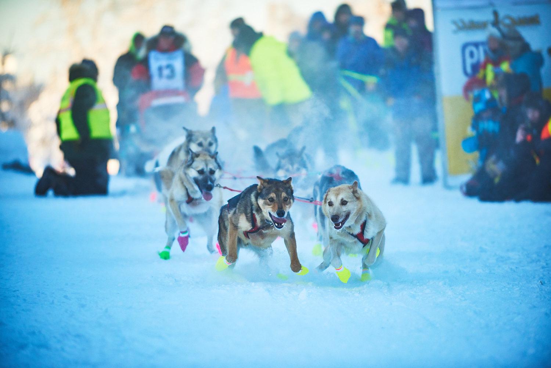Yukon-Quest-Sled-Dog-Race-Photography-Alaska-Yukon-Chance-McLaren-Photography-05.jpg