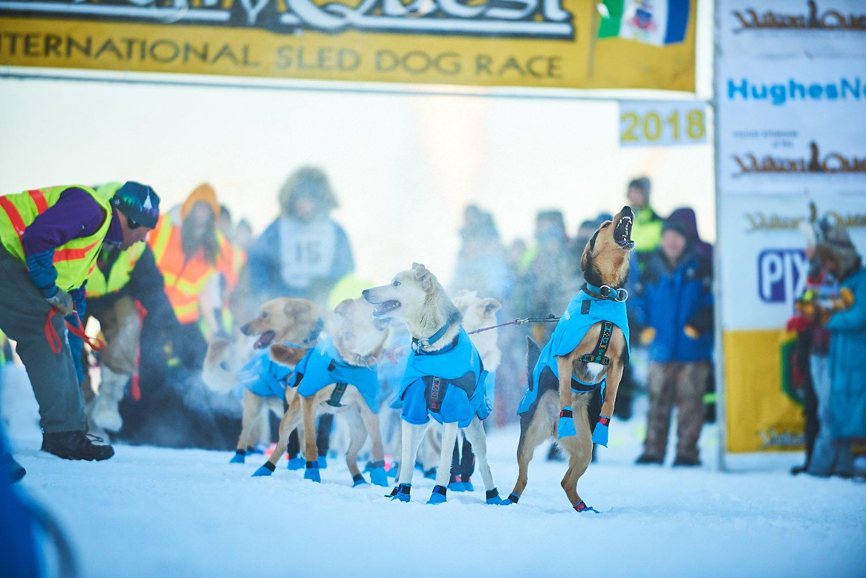 Yukon-Quest-Sled-Dog-Race-Photography-Alaska-Yukon-Chance-McLaren-Photography-07.jpg