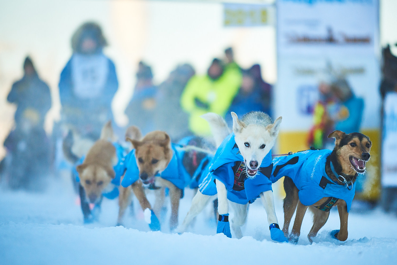 Yukon-Quest-Sled-Dog-Race-Photography-Alaska-Yukon-Chance-McLaren-Photography-08.jpg